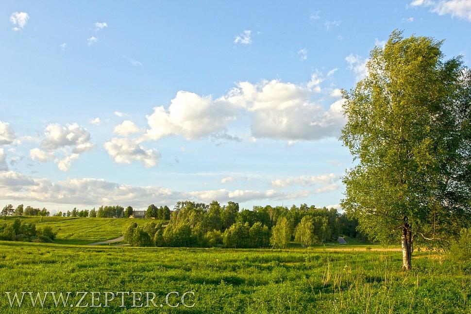 Красивое полу с березой и облаками