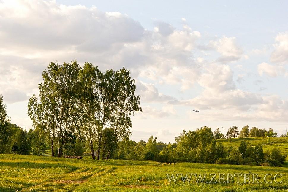 Красивое небо в облаках на фоне трех берез и взлетающего самолета